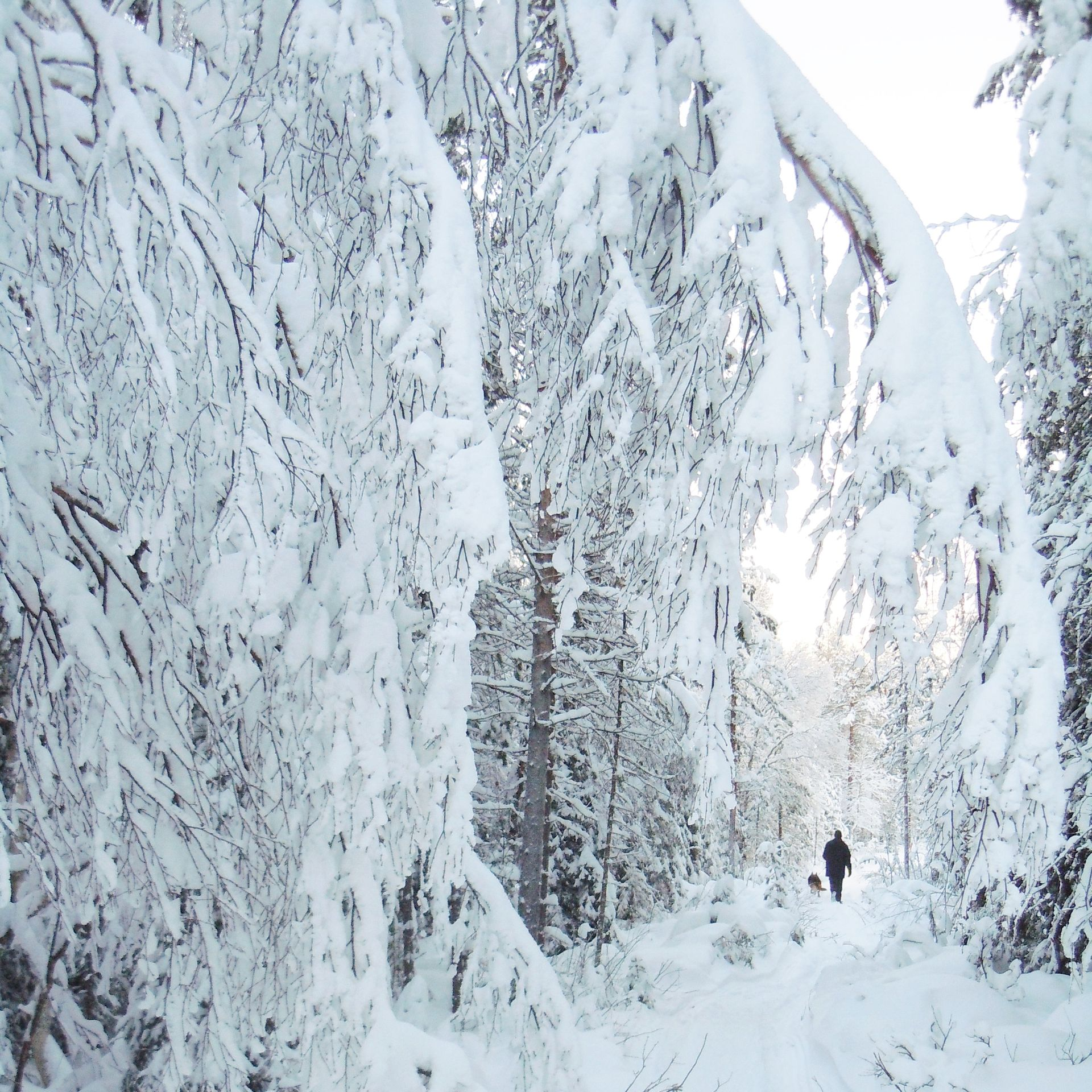 Day trips in winter Lapland