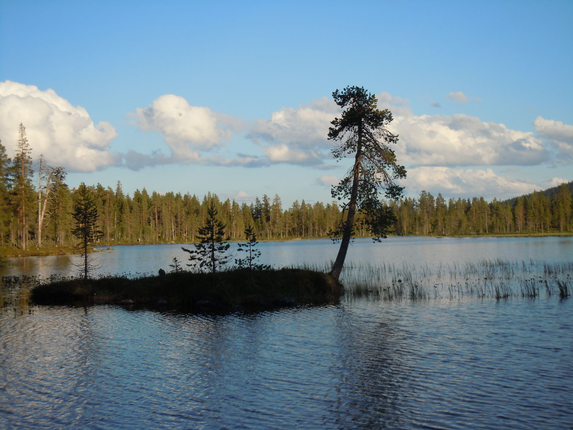 Exciting fishing in Lapland