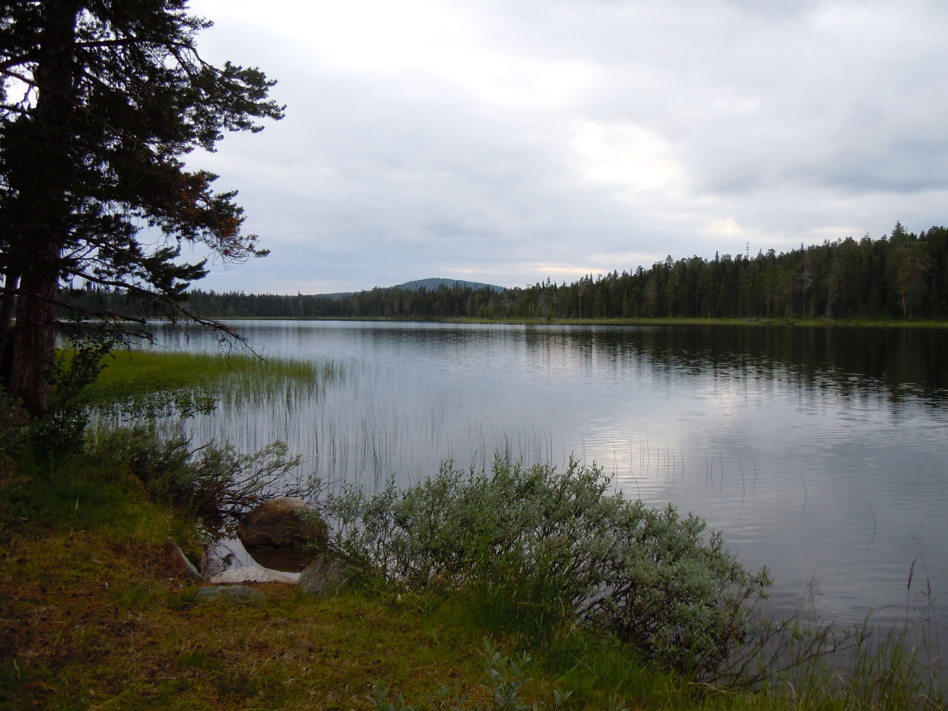 Fishing in Swedish Lapland