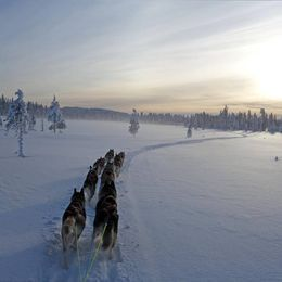 Ice fishing with dog sledding